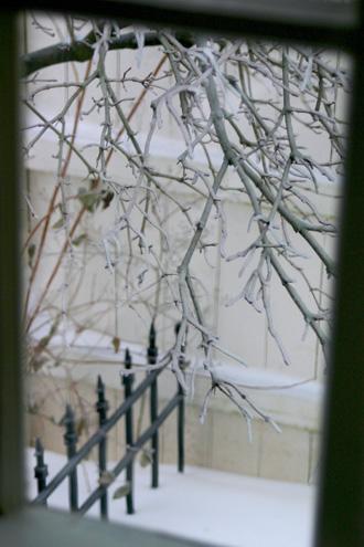 icebranches1.jpg