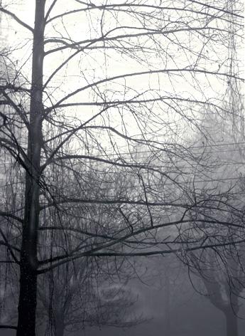 fogtree1.jpg