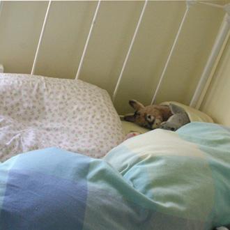 beds1.jpg