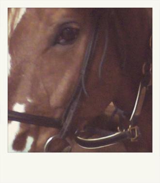 horsepolaroid1.jpg
