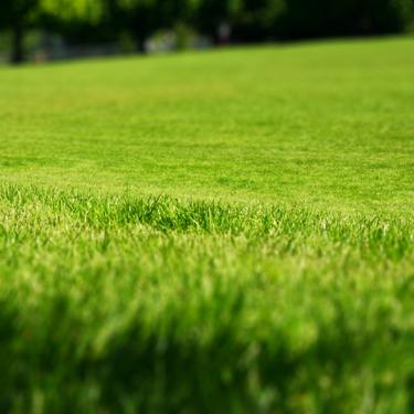grassfieldshift.jpg