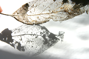 leafdecay.jpg
