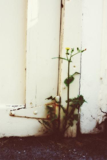 gardenweed.jpg