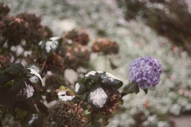 snowishday1.jpg