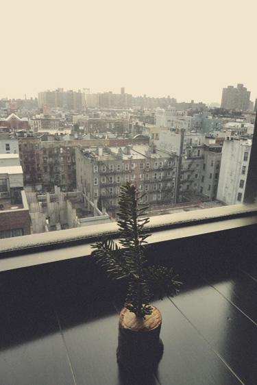 nycxmastree.jpg