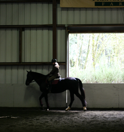 horsebday.jpg