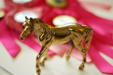 horsebday5.jpg