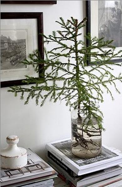 littletree.jpg
