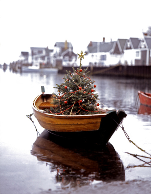 treeboat.jpg