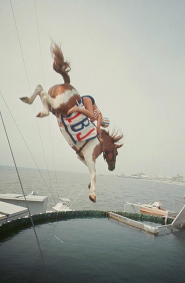 divinghorse.jpg