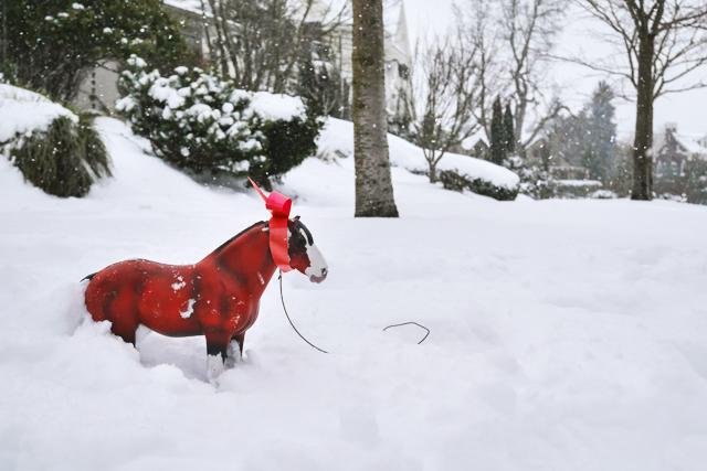 horseinthesnow